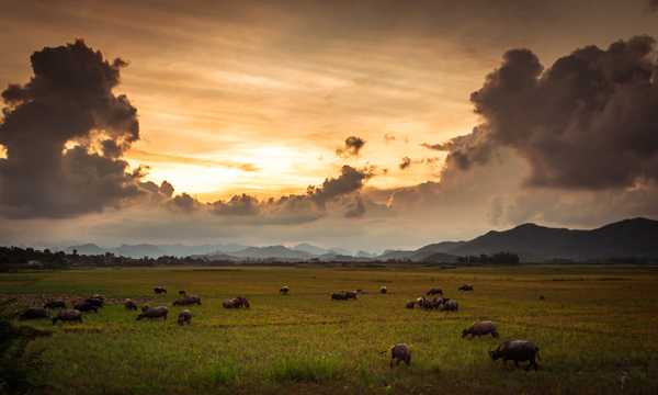 Cover photo of Phong Nha Farmstay